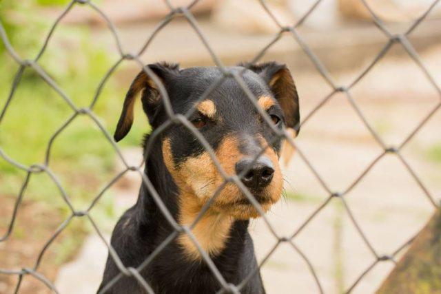 Im Tierheim warten die unterschiedlichsten Hunde auf eine neue Chance.