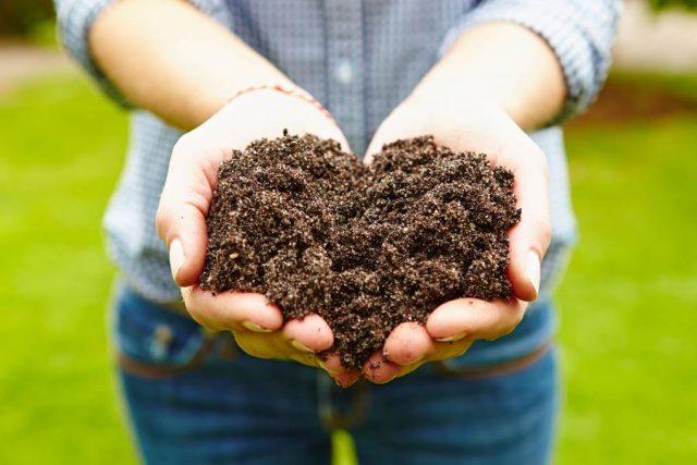 Das Frühjahr ist die beste Zeit, um den Rasen mit den nötigen Nährstoffen zu versorgen.