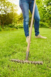 Mit einem Rechen muss der Rasen zunächst von Laub, Moos und abgestorbenen Pflanzenteilen befreit werden.