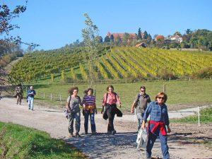 Rund um die Ausläufer des Steigerwaldes führen abwechslungsreiche Wanderwege durch Wald, Wiesen und Weinberge.