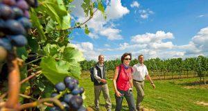 Rund um die unterfränkische Stadt Schweinfurt bietet sich Wanderern eine Erlebnisregion voller Charme. Charaktervolle, vom Weinbau geprägte Landschaftszüge gehen hier sanft ineinander über.