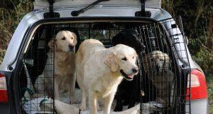 Auch Hunde müssen so sicher wie möglich im Auto untergebracht werden.