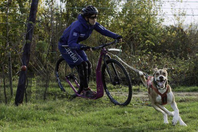Um ihren Vierbeiner sinnvoll auszulasten, schwören immer mehr Hundebesitzer auf den Zughundesport.