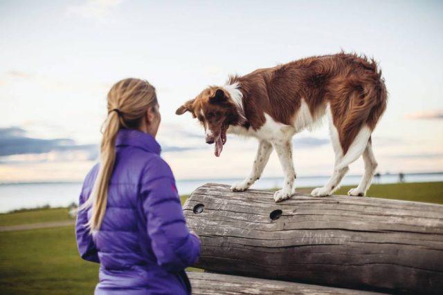 Reisen kann für den Hund zu Angst und Stress führen. Zum Glück gibt es Möglichkeiten, ihn ans Autofahren zu gewöhnen.