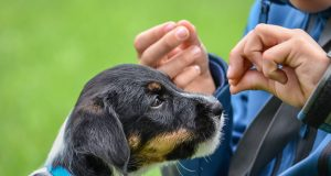 """Hunde können bis zu 250 Worte """"lernen"""""""