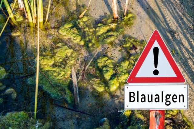 Badeverbot: im Kleidersee Augsfeld wurden Blaualgen gefunden.