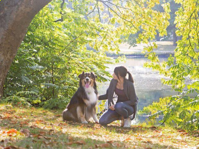 Die Körpersprache von Hunden