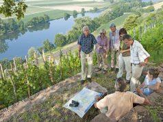 Im Herbst ist Weinlesezeit im Fränkischen Weinland, beim Wandern kann man sie hautnah und genussvoll erleben.