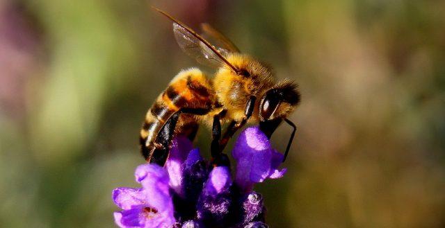 Rettet Die Bienen Ergebnis