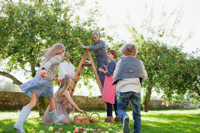 Äpfel sind seit Jahren das Lieblingsobst der Deutschen.