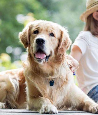 Bissverletzungen: So friedlich läuft das Zusammenleben zwischen Mensch und Hund nicht immer ab. Foto: djd/Hermes Arzneimittel GmbH/adpic