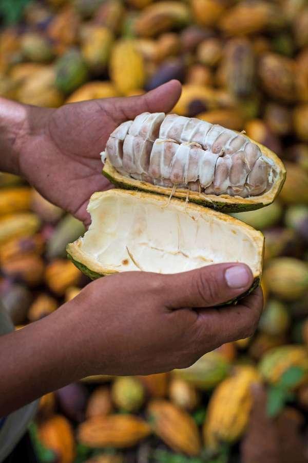 Die Nachfrage nach fair gehandelten Kakaoprodukten wächst stetig.