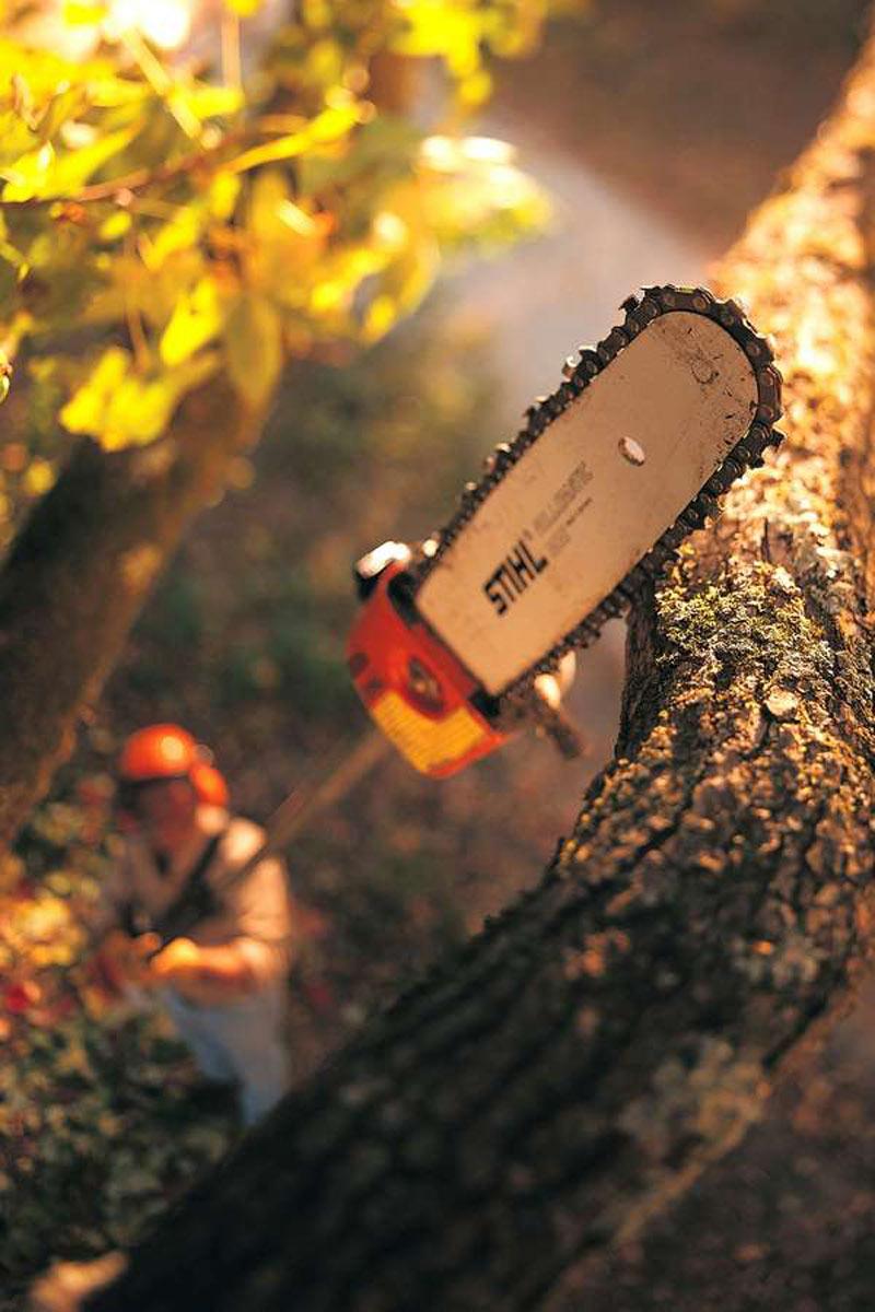 Rückschnitt: Hochentaster ermöglichen die Arbeit in der Höhe - etwa, um die Baumkronen auszulichten. Foto: djd/STIHL