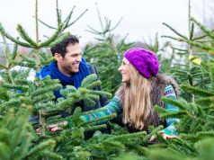 Weihnachtsbaum aussuchen gehört zur Weihnachtszeit dazu.