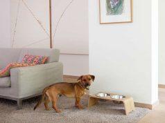 Mit der Dogbar wird der Futterplatz zu einem Blickfang im Wohnzimmer. Die ästhetische Futterstation ist ab 119 Euro erhältlich. Foto: djd/Oskar Designmanufaktur