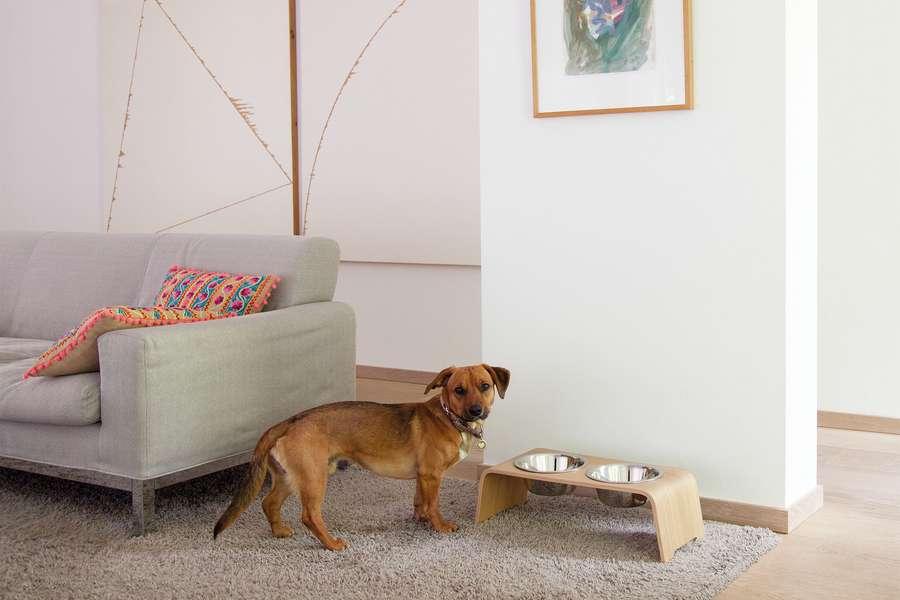 Edle Fressnäpfe – Futterstationen für Hund und Katze