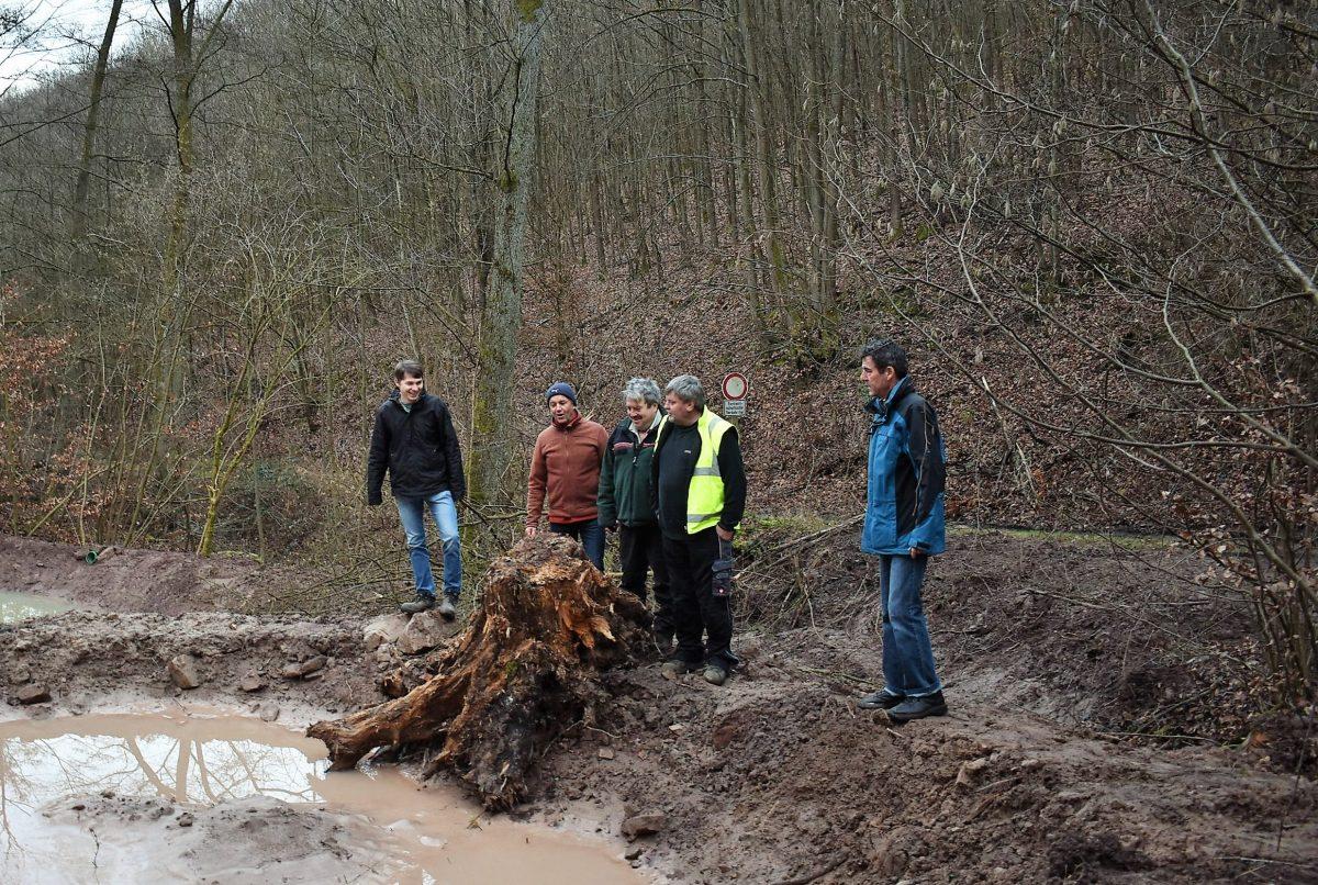 Feuchtbiotope machen den Wald fit - MAINLIKE®