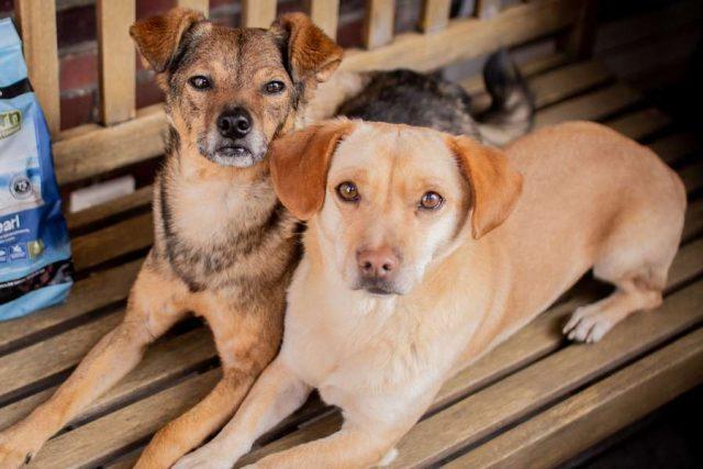 Futter: Eine gesunde Ernährung ist wichtig, damit Hunde lange fit und gesund bleiben. Foto: djd/www.wildborn.com