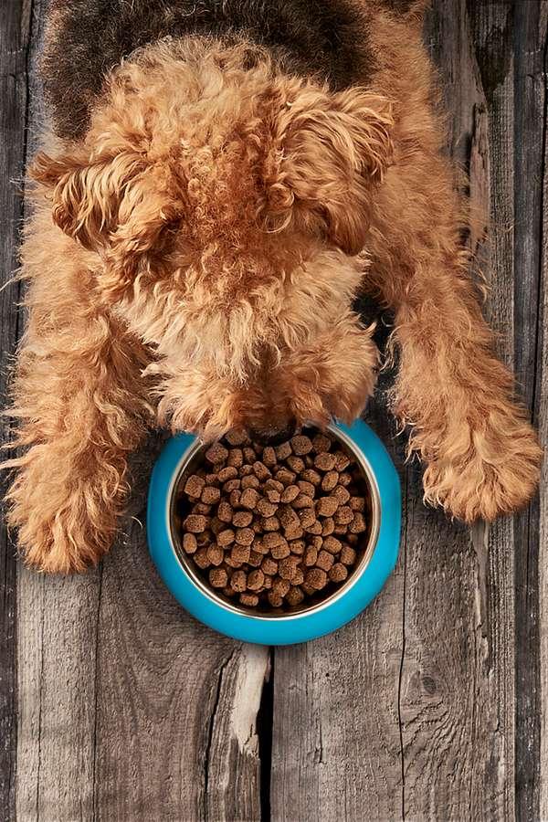 Halbfeuchte Softfutter kombinieren die Vorteile von Nass- und Trockenfutter.