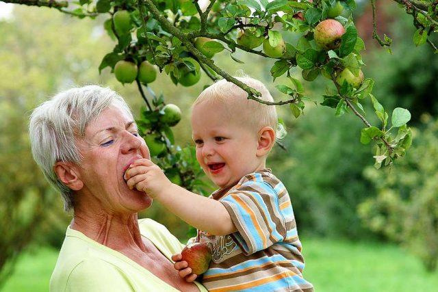 Erntehelfer: Am besten schmecken Jonagold, Elstar, Cox Orange und Co. unbehandelt aus dem heimischen Garten.