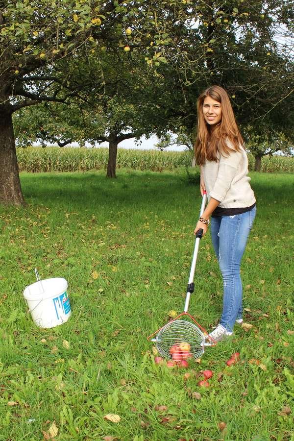 Praktischer Erntehelfer: Das Auflesegerät wird an einem Stiel über den Rasen gerollt und sammelt dabei das Obst automatisch in einen Drahtkorb.