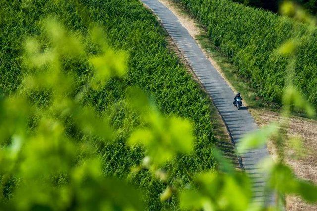 Landschaftlich lassen die Touren durch die Karlstadter Weinberge und die Region keine Wünsche offen.