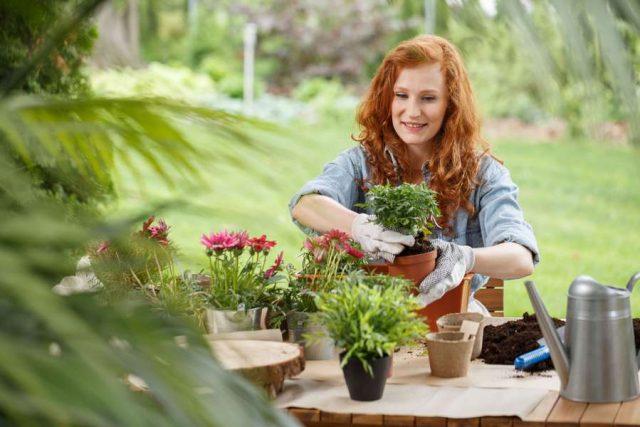 Gestaltete Außenbereiche: Mit Kübel- oder Balkonpflanzen lassen sich ganz einfach schöne Akzente im Garten oder auf der Terrasse setzen. Weitere Ideen und nützliche Tipps für die Gestaltung des Außenbereichs sind über die Online-Suche zu finden.