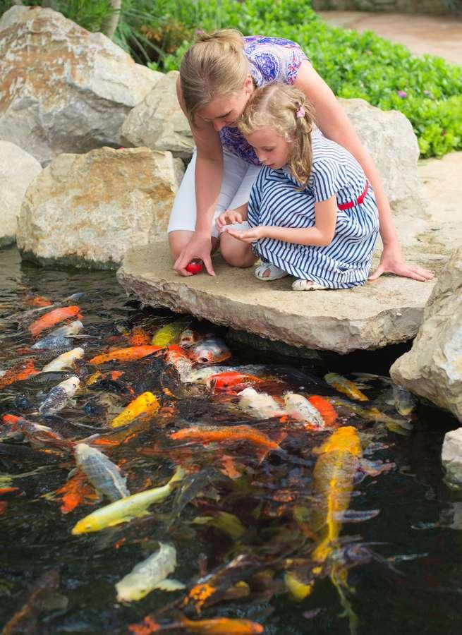 Die Fische im Gartenteich brauchen gerade während sommerlicher Hitzeperioden ausreichend Luft zum Atmen, wobei im warmen Wasser der natürliche Sauerstoffgehalt sinkt.