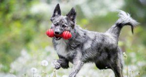 Stöckchen, nein danke! Als vollwertiges Familienmitglied ist der moderne Hund mit eigenem Spielzeug ausgestattet.