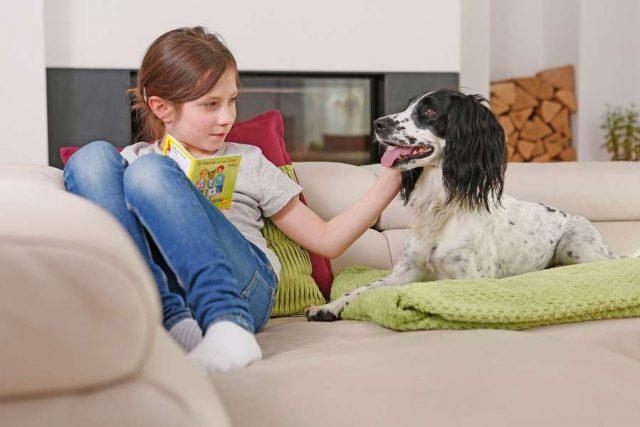 Wenn der Hund lieber liegt als läuft, kann dies ein Hinweis auf Arthrose sein.