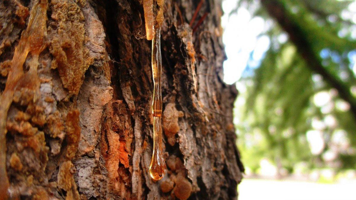 Das Gold der Bäume